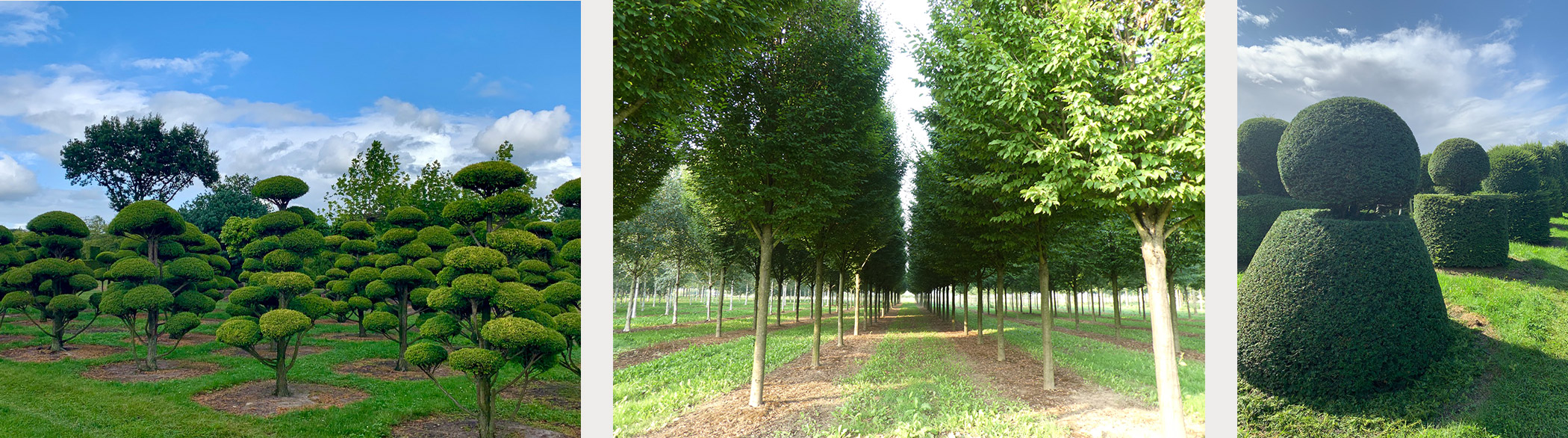 Sourcing and supply of trees, topiary and hedges